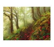 Heye Magic Forests - Path 29519
